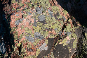 Rhizocarpon geographicum (Yellow Map Lichen, World Map Lichen)
